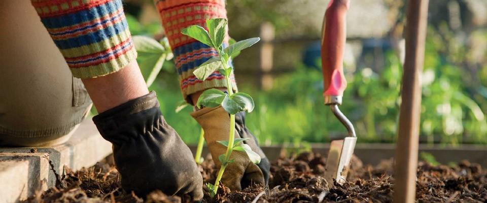 Τομέας : Γεωπονίας, Τροφίμων και Περιβάλλοντος